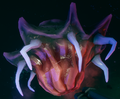 Jelly Breeder.png