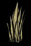 Grass Tuft.png