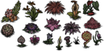 Exotic flowers (all).png