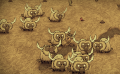 A herd of Beefalos.png