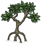 Mangrove Tree.png