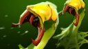 Venomancer Plague Ward icon.png