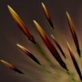 Quill Spray icon.png