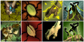 Treant Protector ability icon progress.png