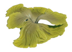 The Emerald Abyss Schizophyllum Preview.png