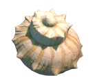 Reef's Edge Shell Preview.png