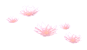 Immortal Garden Lotus Preview.png