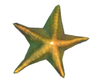 Reef's Edge Starfish Preview.png