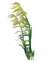 Reef's Edge Tree Kelp Preview.png