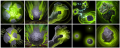 Earth Spirit ability icon progress.png