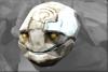 Elemental Ice Head