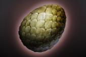 Грявольское яйцо