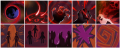 Shadow Demon ability icon progress.png