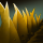 Burrowstrike icon.png