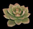 Desert Terrain Succulent Plant Preview.png