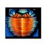 Helmet Crab Shell