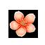 Amber Sakura Petal