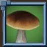 BoleteMushrooms Icon.png