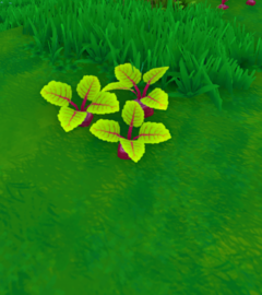 Beets Plant.png