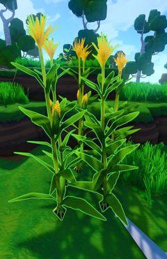 Corn Plant.jpg