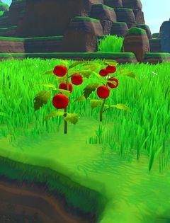 Tomatoes Plant.jpg