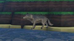 Wolf Animal.jpg