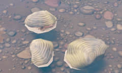 Clam Plant.png
