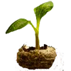 Pumpkin Sprout.png