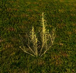 Fiber (Plant).png