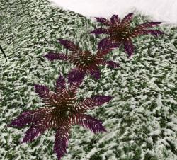 Phoenix Fern Frond (Plant).png