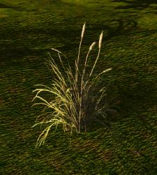 Sugarcane (Plant).png