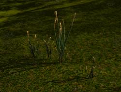 Pixie Stalk Bundle (Plant).png