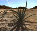 Aloe Vera (Plant).png