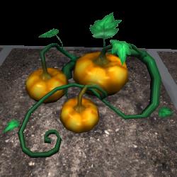Pumpkin (Plant).png