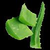 Aloe Vera.png