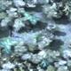 Crystal Forest.png