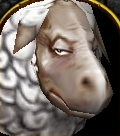 Sheep face.jpg