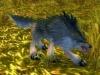 Lobo sarnoso