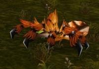 Imagen de Araña del bosque