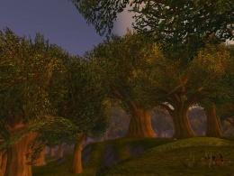 Elwynn Forest.jpg