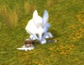 Stonetalon Pass Rabbit.jpg