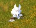 Stonetalon Pass Rabbit.jpg
