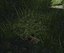 Groundcache.png
