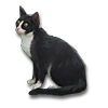 Poe2 pet backer cat Faru Nils icon.png