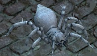 Crystal-eater-spiderling.jpg