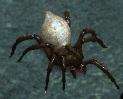 Widowmaker-spiderling.jpg