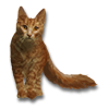 Poe2 pet backer cat Kathrynn icon.png