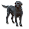 Poe2 pet backer dog Atlas icon.png