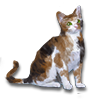 Poe2 pet backer cat Bernhard icon.png