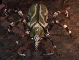 Adra-Beetle.jpg